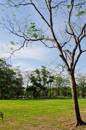 Green floor with tree, Thailand. Stock Photo - 13294430