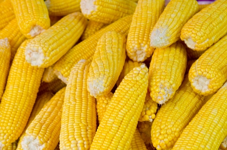 Group of yellow corn at the market, Thailand Stock Photo - 15028261