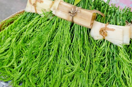 Friss Acacia pennata a thaiföldi piacon, Thaiföld Stock fotó