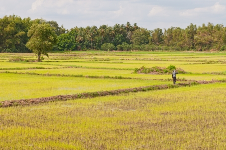 Green field in the country, Thailand