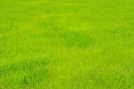 country park: Green field in the country, Thailand.