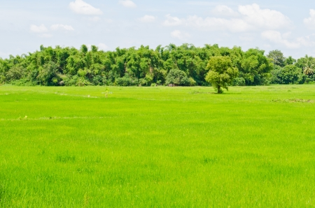 Green field in the country, Thailand. photo