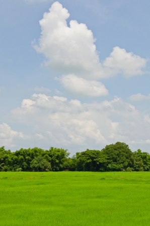 Green field in the country, Thailand.