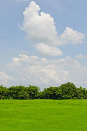 Zöld mező az országban, Thaiföldön.