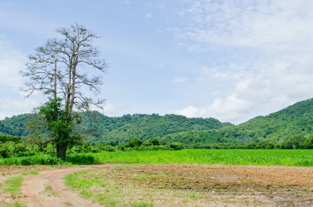 Tree with mountain and blue sky, Thailand. Stock Photo - 15386871