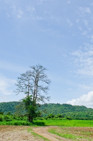Tree with mountain and blue sky, Thailand. Stock Photo - 15386869