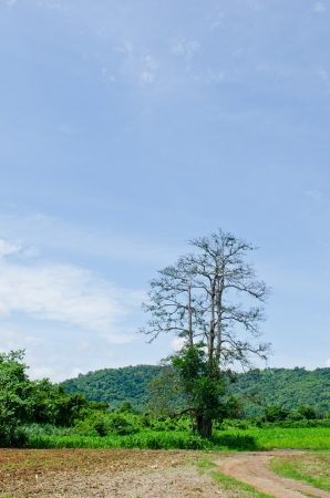 Tree with mountain and blue sky, Thailand. Stock Photo - 15386870