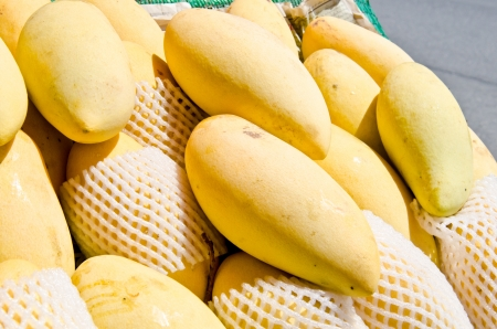Close up of yellow mango on market stand, Thailand. photo