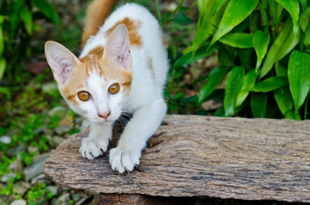 Little cat in the garden, Thailand. photo