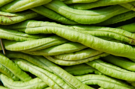 yardlong bean background, Thailand. photo
