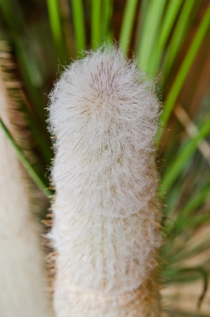 Macro of cactus in garden, Thailand. photo