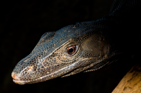 Close up of black monitor, Thailand. Stock Photo - 16748586