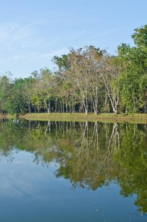 Landscape of Sakaeo pond at Sakaeo province, Thailand. photo