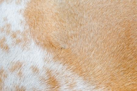 Hair of Thai dog, Thailand. Stock Photo