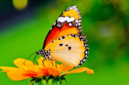Beautiful butterfly on flower in public park, Thailand. photo