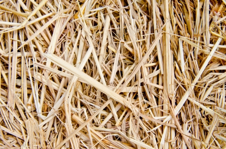 Rice straw background, Thailand. photo