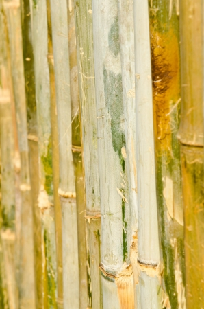 Bamboo background, Thailand. photo
