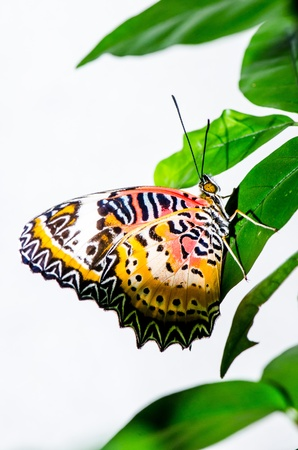 Beautiful butterfly in nature, Thailand photo
