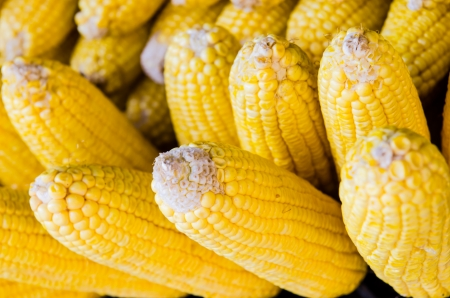 Group of fresh corn, Thailand. photo