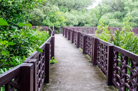 Walk way in mangrove forest, Thailand. photo