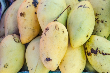 mango fruit: The fresh yellow mango fruit, Thailand.