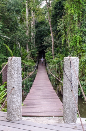 Suspension bridge in national park, Thailand. photo