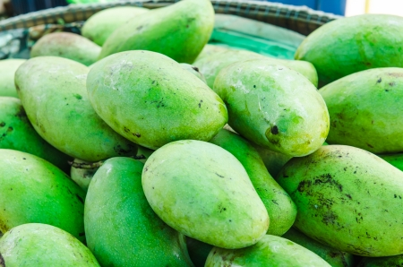 mango fruit: The fresh green mango fruit, Thailand.