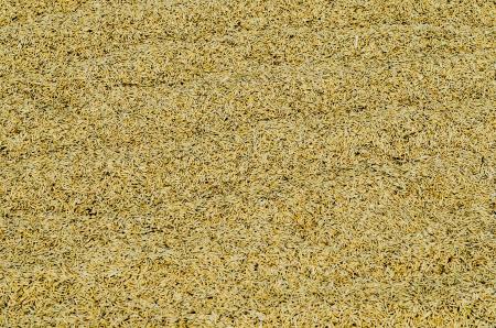 Unhusked rice in warehouse, Thailand. photo