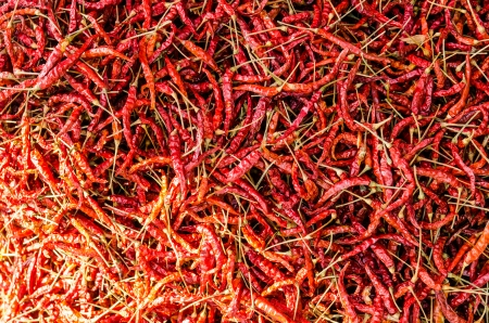 dried red chili pepper, Thailand photo