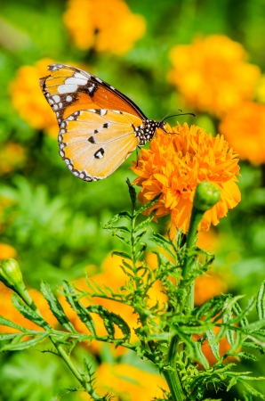 Butterfly on flower in public park, Thailand photo