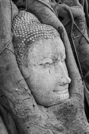 Head of Buddha statue in tree roots at Mahathat temple, Ayutthaya province, Thailand photo