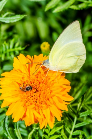 Yellow butterfly on flower in public park, Thailand photo