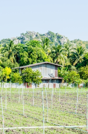 country side: Landscape of country side in Thai, Thailand