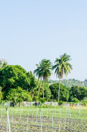 Landscape of country side in Thai, Thailand photo