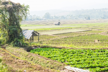 Vegetable garden in Thai nature, Thailand photo