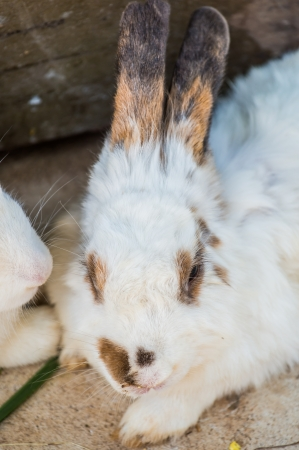 Head shot of lovely rabbit photo