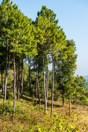 chiangmai province: Forest on Mountain at Chiangmai Province, Thailand