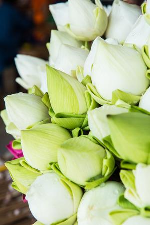 Close up of Thai lotus flowers photo