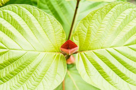 treetop: Beautiful treetop in nature, Thailand