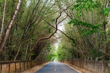 Tree tunnel with road, Thailand photo
