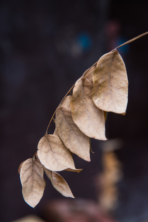 Dry leaf in park, Thailand photo