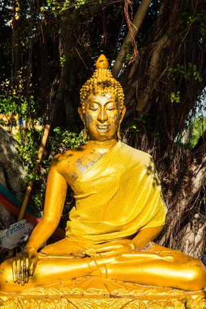 veneration: Golden buddha statue under the tree, Thailand