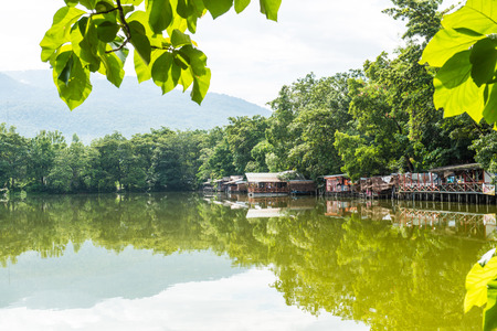 Green leaves with lake view, Thailand photo