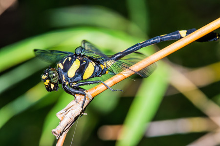 Close up of dragonfly, Thailand photo