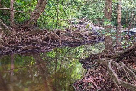 Natural landscape at Pang Sida waterfall in national park, Thailand photo
