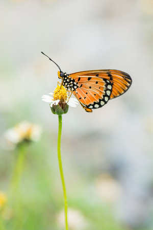Butterfly sitting on grass flower, Thailand photo