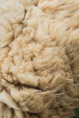 sheep skin: raw wool or sheep skin, Thailand Stock Photo