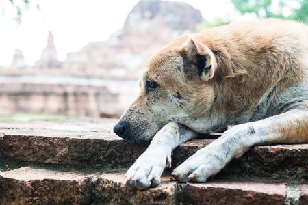 Thai dog on ancient wall, Thailand Stock fotó