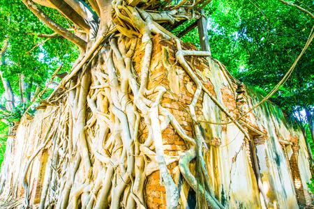 creeping plant: Ancient Thai Church at Sang Kratai Temple, Thailand.