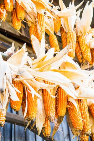 Dried corn hanging, Thailand. photo